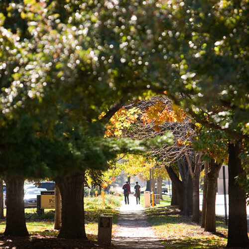 Students walk down a leafy pathway at PNW's Hammond campus