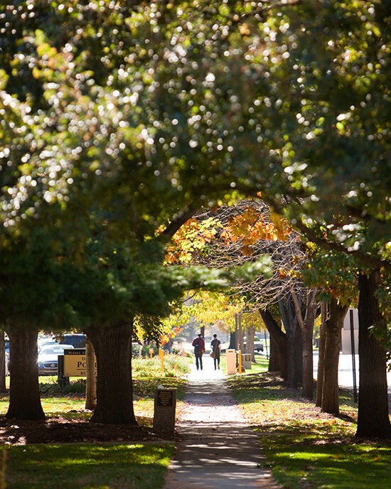 A fall view of PNW campus, looking down a tree-lined sidewalk.