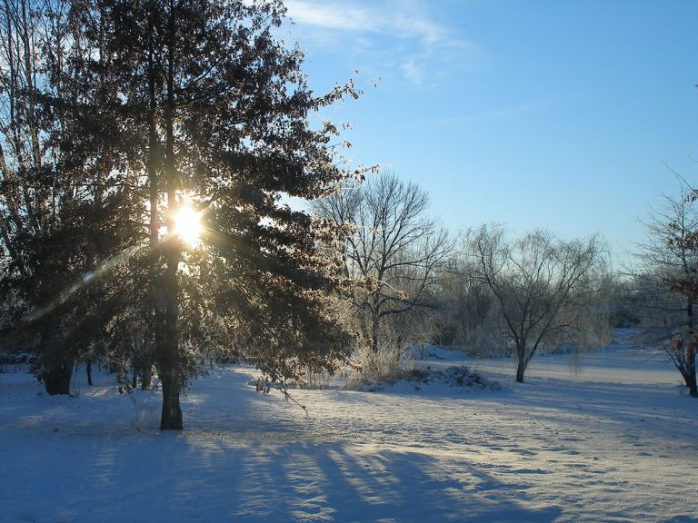 Winter sun shines at Gabis Arboretum