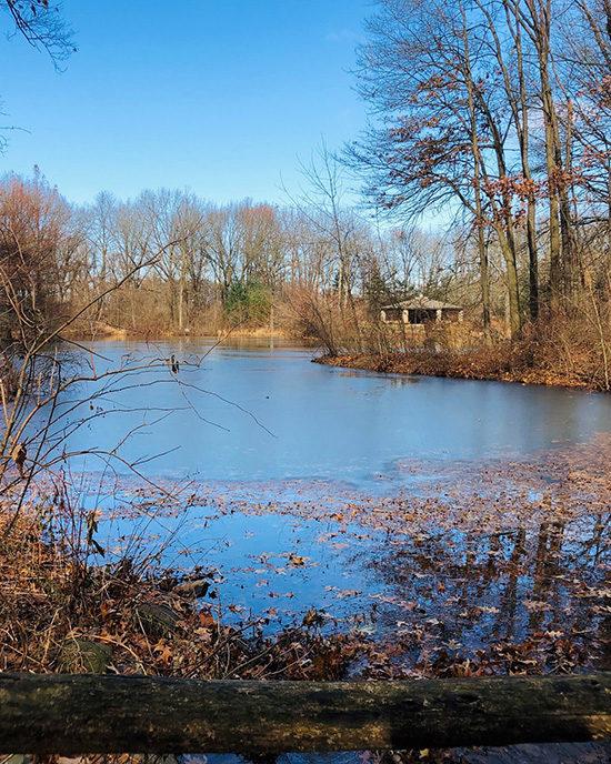 A pond at Gabis Arboretum