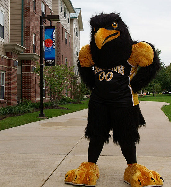 Purdue University Calumet's Peregrine mascot stands outside Peregrine Hall.