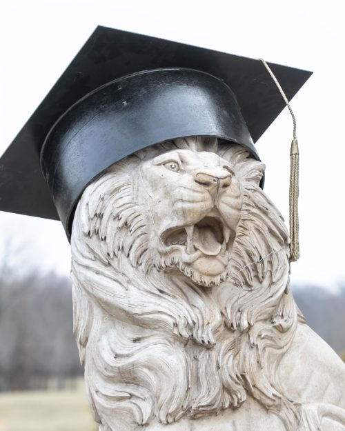 commencement lion in grad cap