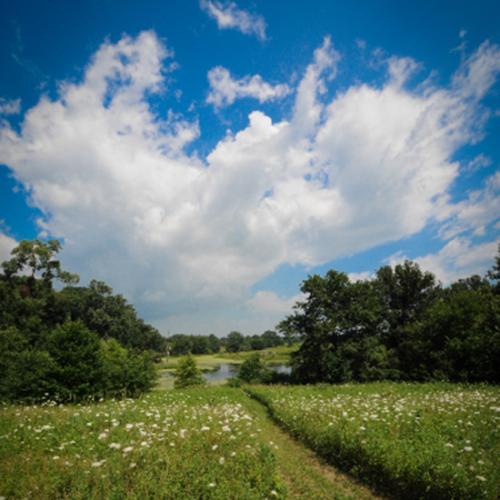 A hiking trail at Gabis Arboretum