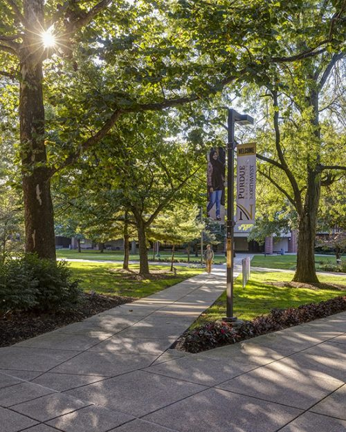 A leafy lane on PNW's Hammond Campus.
